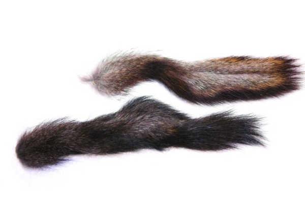 Bild på Sibirisk Ekorre