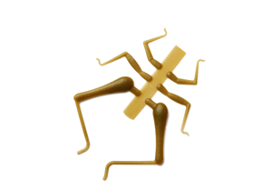 Bild på Gräshoppsben (H) H2