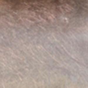 Bild på SLF Standard Dubbing Blue Dun