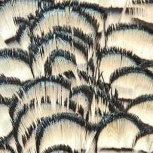 Bild på Amherst Pheasant (Nacke) Natural