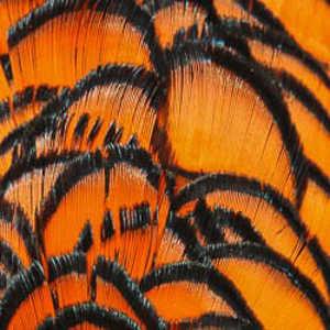 Bild på Amherst Pheasant (Nacke) Orange