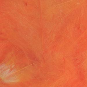 Bild på Cul De Canard (CdC) Orange
