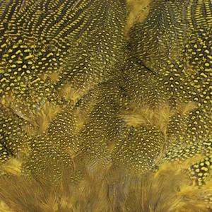 Bild på Guinea/Pärlhöna (helt skinn) Yellow