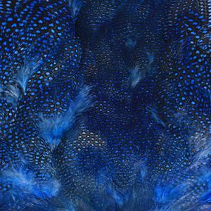 Bild på Guinea/Pärlhöna (helt skinn) Blue
