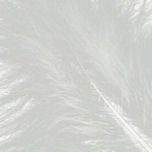 Bild på Marabou Fjäder (Plumes) White