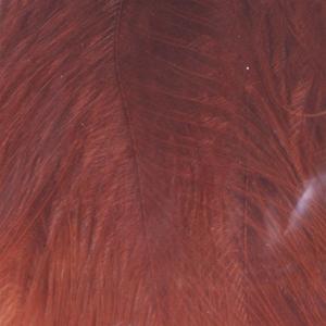 Bild på Marabou Fjäder (Plumes) Brown