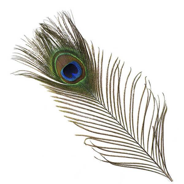 Bild på Peacock (Påfågel ögonfjäder)