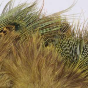 Bild på Ringfasan Rumphackel Golden Yellow