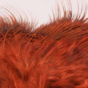 Bild på Ringfasan Rumphackel Orange