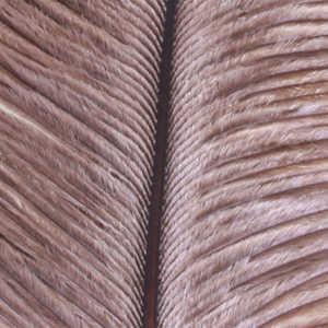 Bild på Ostrich Herl (Struts) Grey