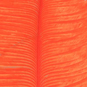 Bild på Ostrich Herl (Struts) Orange