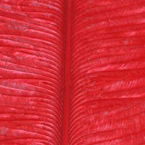 Bild på Ostrich Herl (Struts) Red