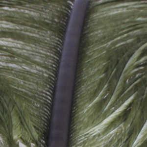 Bild på Ostrich Herl (Struts) Olive