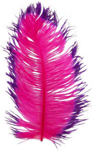 Bild på Tip Dyed Ostritch (Struts) Cerise/Purple