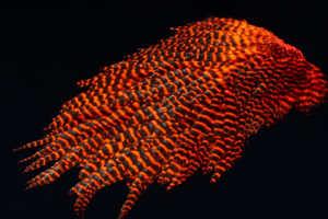 Bild på Signature Hen Saddle Orange Grizzly