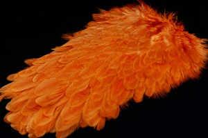Bild på American Hensaddle Burnt Orange