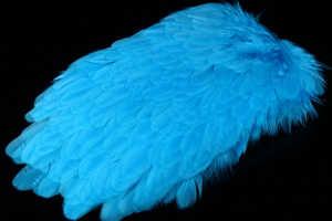 Bild på American Hensaddle Kingfisher Blue
