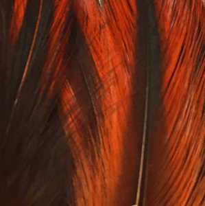 Bild på Tupphackel Badger Orange