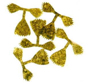 Bild på Kiley's Fish Finz Mottled Olive (Small)