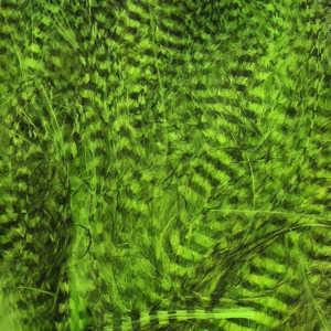 Bild på Marabou Fine Barred Feathers Fluo Chartreuse