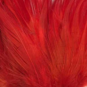 Bild på Tupphackel  Red