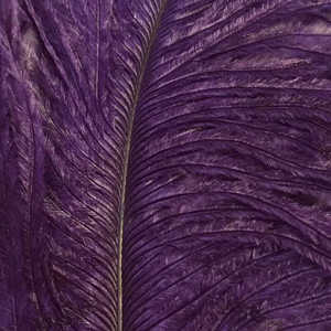 Bild på Ostrich Herl (Struts) Purple