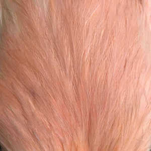 Bild på Whiting/Feathermaster Tuppsadel Salmon Pink
