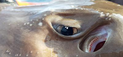 Galet bra västkustfiske | RAPPORT | EL-GE Sportfiske