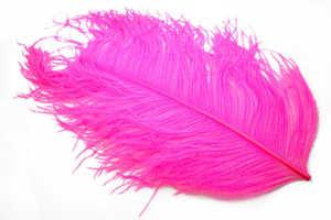 Bild på Tip Dyed Ostritch (Struts) Pink