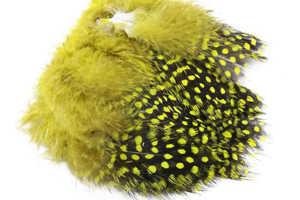 Bild på Guinea (Pärlhöna hackel) Yellow