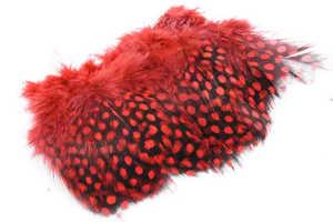Bild på Guinea (Pärlhöna hackel) Red