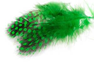 Bild på Guinea (Pärlhöna hackel) Green Highlander