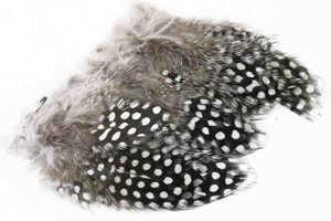 Bild på Guinea (Pärlhöna hackel) Natural