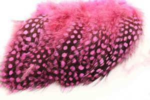 Bild på Guinea (Pärlhöna hackel) Hot Pink