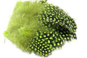 Bild på Guinea (Pärlhöna hackel) Chartreuse