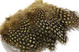 Bild på Guinea (Pärlhöna hackel) Olive