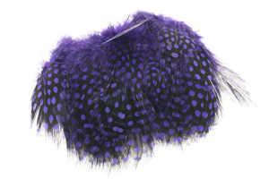 Bild på Guinea (Pärlhöna hackel) Purple