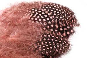 Bild på Guinea (Pärlhöna hackel) Light Pink