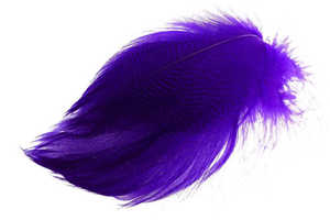 Bild på Selected Gadwall Barred Flank Purple