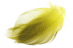 Bild på Selected Gadwall Barred Flank Yellow