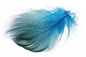 Bild på Krickand/Tealduck Flank Kingfisher Blue