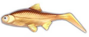 Bild på Hooligan Roach JR 15cm 45g Gold Digger