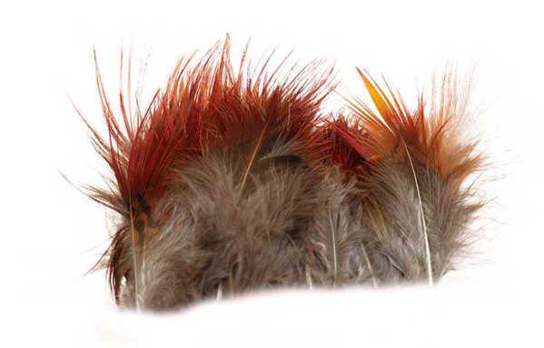 Bild på Guldfasan Red Body Feathers Strung