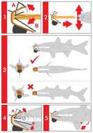 Bild på PredaPro Bait Fish Rig