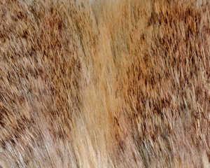 Bild på A.Jensen Super Select Craft Fur Grizzly Tan